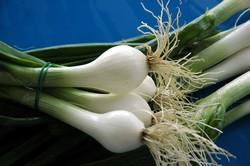 Cipollotto-nocerino